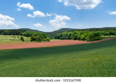 A soothing green and pink field