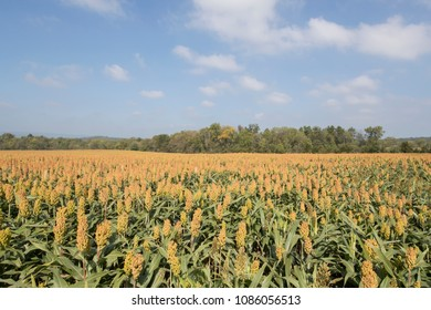 Sorghum fields at Gettysburg National Battlefield
