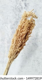 Sorghum flower over rustic white background