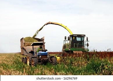 Sorghum harvesting in Brazil, combine harvester emptying grain in a trailer