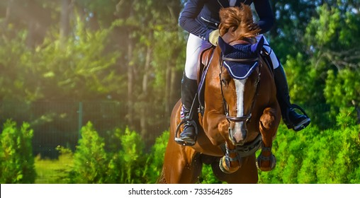 Sorrel dressage horse and rider in uniform performing jump at show jumping competition. Equestrian sport background. Chesnut horse portrait during dressage competition. Selective  focus.