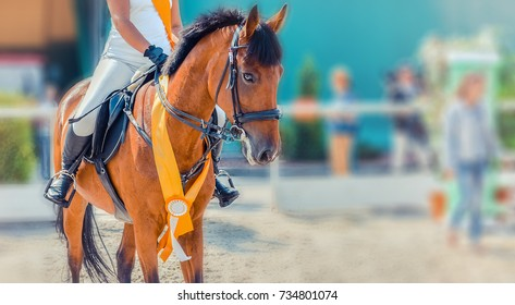 Sorrel dressage horse and rider in white uniform at show jumping competition. Equestrian sport background, winner waiting for prize-giving ceremony. Horse portrait closeup during awarding.