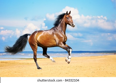 Sorrel horse galloping on the beach