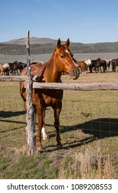 Sorrel horse in wooden corral on ranch with herd of horses