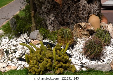Sorrento,Campania/Italy-April 4th 2018 Sorrento is a small city in Campania, Italy. It is a popular tourist destination. This is a cactus garden at the tourist information centre in the town centre