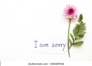 i am sorry message card with flower on background white