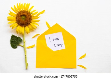 i am sorry message card handwriting in yellow envelope with yellow flower sunflower arrangement flat lay postcard style on background white