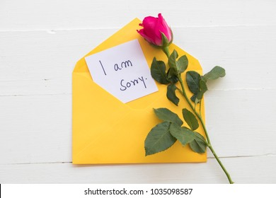 i am sorry message card with pink rose in envelope on background white
