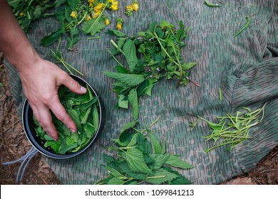 sorting and collecting herbs food for survival