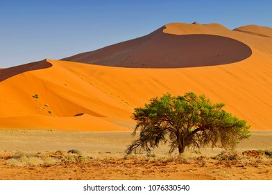 Sossusvlei landscape with Acacia trees and red sand dunes, Namibia, southern Africa.