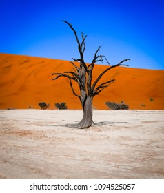 Sossusvlei, Namibia. A dramatic dead, black tree on the white sakt pan. The orange sand dune and the blue sky make it the perfect picture of namibia, desert, and color.