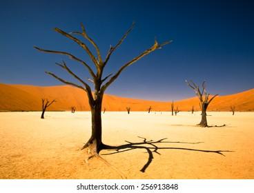 Sossusvlei Taken at Sossusvlei, near Deadvlei in Namibia, Africa.