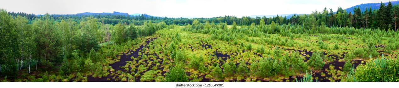 Soumarske raseliniste (moor or peat bog), Sumava national park (Bohemian forest) in Czech Republic