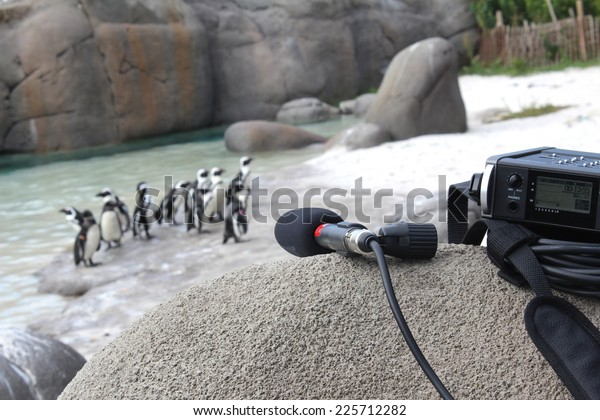 Sound measurement of the verses of the penguins on the beach with microphone