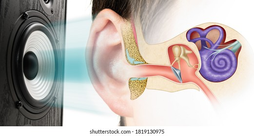 Sound speaker and structure of the human ear. Influence of loud sound on hearing.