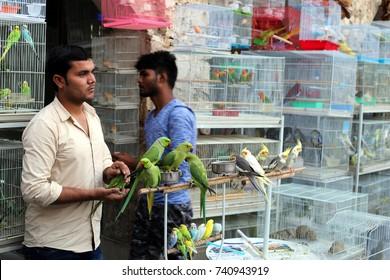 SOUQ WAQIF, DOHA, QATAR - OCTOBER 23, 2017: Staff with stock in the pet shop area of Souq Waqif in Qatar, Arabia.