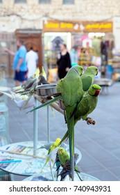 SOUQ WAQIF, DOHA, QATAR - OCTOBER 23, 2017: The pet shop area of Souq Waqif in Qatar, Arabia.