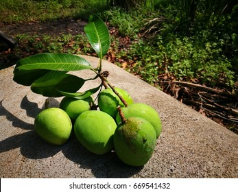 """Sour Young Mango is among favorite fruit in Malaysia. In Malay known as """"mempelam muda"""" or """"pelam putik"""""""