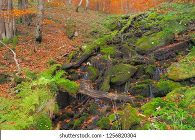 Sources of forest stream in autumn. Hulski stream. Bieszczady Mountains. Bieszczady National Park.