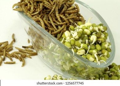 sources of protein, vegetable mung beans and animal mealworms