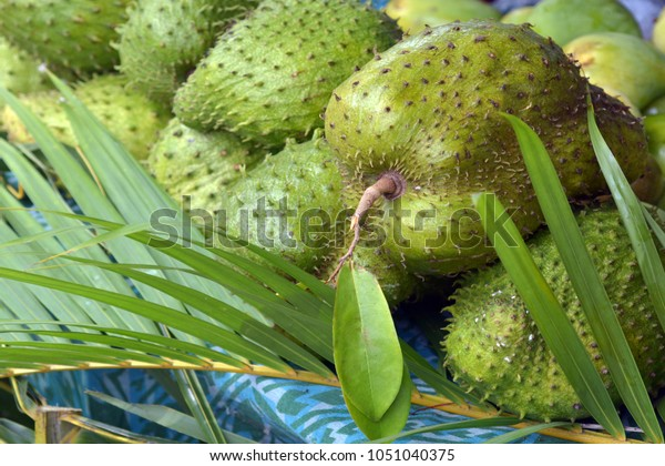 Soursop fruit for slae in the market in Rarotonga, Cook Islands. Soursop used in alternative medicine for cancer treatment. Food background and texture. Copy space