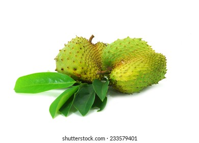 Soursop, Prickly Custard Apple. (Annona muricata L.)