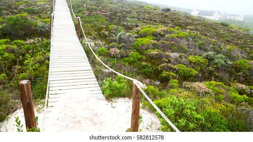 in south  africa beach walkway  near indian ocean flower  sky and rock