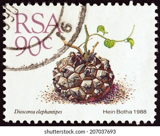 "SOUTH AFRICA - CIRCA 1988: A stamp printed in South Africa from the ""Succulents "" issue shows Elephant's foot (Dioscorea elephantipes), circa 1988."