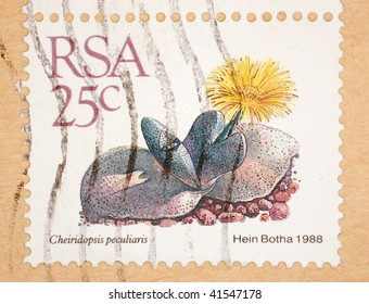 SOUTH AFRICA - CIRCA 1988: A stamp printed in South Africa shows image of a Cheiridopsis peculiaris flower, series, circa 1988