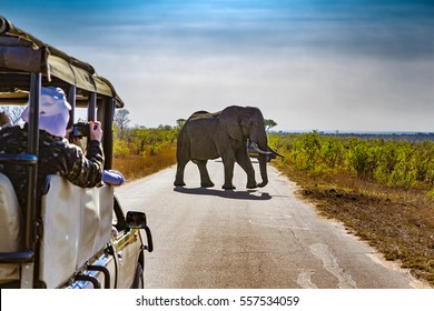 Sudáfrica. Safari en el Parque Nacional Kruger - Elefantes Africanos (Loxodonta africana)