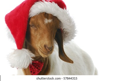 christmas goat pictures