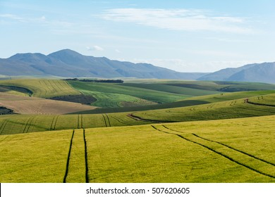 South African Farmland and Meadows close of Hermanus