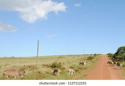 South African Wildlife Gondwana Game Reserve circa 2012