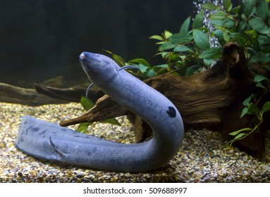 Lungfish | Lungfish Images Stock Photos Vectors Shutterstock