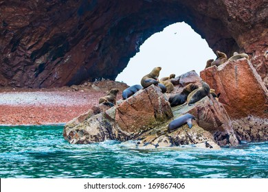 South American Sea lions relaxing on rocks of Ballestas Islands in Paracas National park,Peru. Flora and fauna