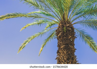 south beach summer time scenic landscape palm tree on blue sky background