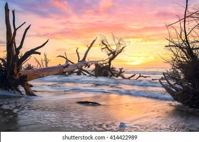South Carolina Lowcountry Dead Tree Boneyard Beach Sunrise On Edisto Island