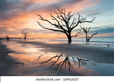 South Carolina Lowcountry Edisto Island Botany Bay Plantation Boneyard Beach Dead Tree along the Atlantic Coastline