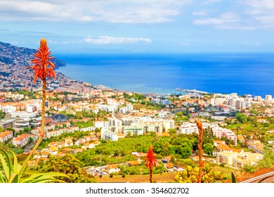 South coast of Funchal - view over the capital city of Madeira towards harbor with typical madeiran flowers in the foreground. View from Pico dos Barcelo.