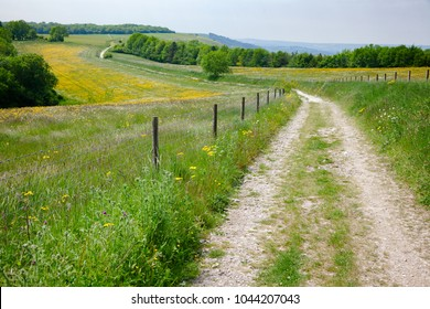 South Downs Way, a  long distance footpath and bridleway along the South Downs hills in Sussex, Southern England, UK