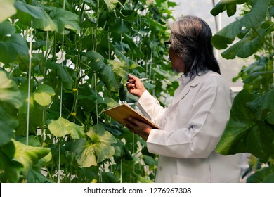 South East Asian senior agriculture researcher in scientist lab coat examining and working on vegetable and plant data technology inside farm lab