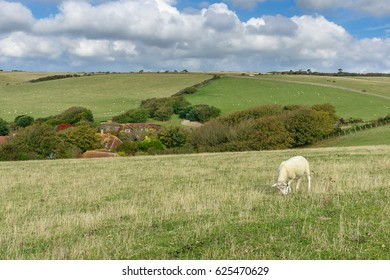 South East of England: Sheep pasture on the white cliffs