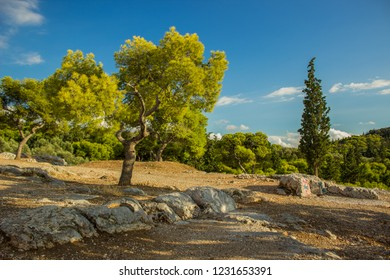 south exotic park outdoor mountain rocks nature Savannah landscape with vivid green trees on a ground and bare stones in clear bright summer weather time