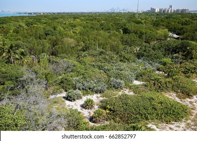 South Florida coastal sand dune habitat off Key Biscayne Island in Miami, Florida.  View from the Bill Baggs Cape Florida State Park Lighthouse.