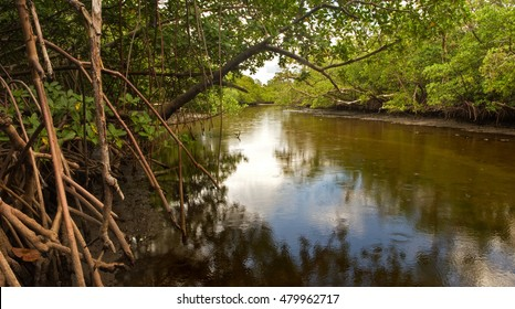 South Florida wetland: a small brackish creek flanked by mangrove trees and swamp in South Florida, in late afternoon