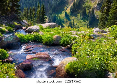 South Fork of Boulder Creek on a sunny summer day with yellow wildflowers in full bloom