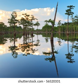 South Georgia swamps and cypress tress, George L smith state park.  Twin city