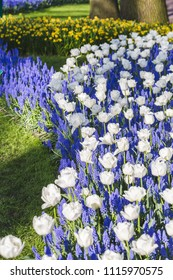 South Holland, Netherlands,Keukenhof Gardens