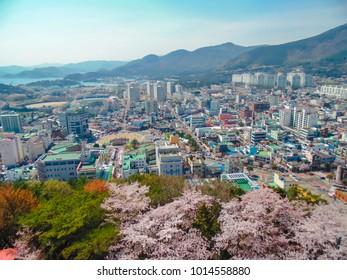 South Korea - April 2013 : Aerial view of Jinhae Cherry Blossom Festival at Jinhae city, South Korea.