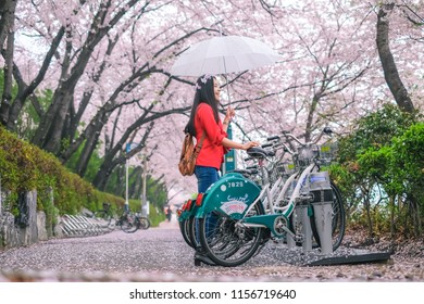 South Korea - April 2018 : Young pretty girl traveling in Jinhae cherry blossom festival at Jinhae city of South Korea on April 2018.